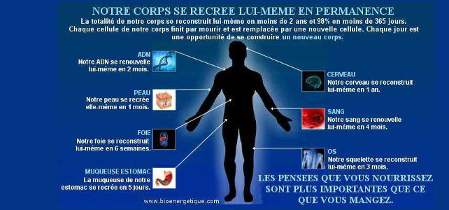 Autoguérison, notre corps se recrée en permanence, bioénergétique, décodage biologique