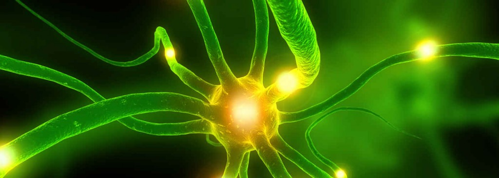 Impulsion électrique cellule nerveuse