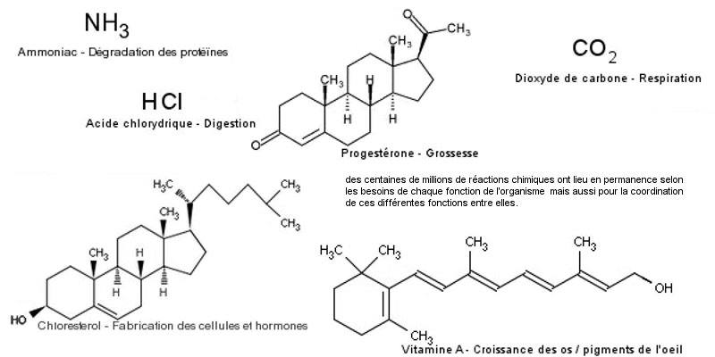 Molécules synthetisees par le corps
