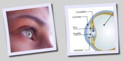 Oeil décodeur vibratoire de la lumière